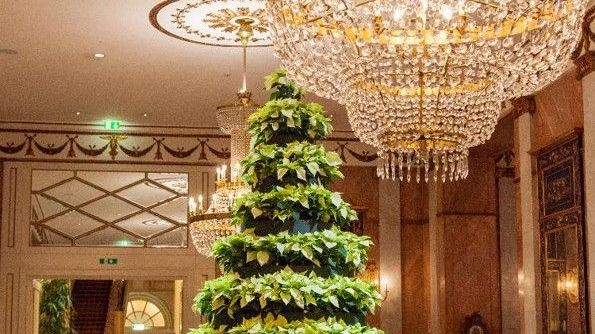 Christmas Tree Westin Excelsior Rome